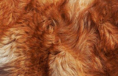 Fototapete Makro Wolle hell-rote Hund