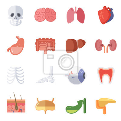 Male and female anatomy. vector illustration set of human organs ...