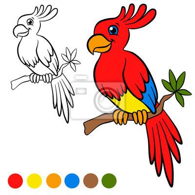 Fototapete Malvorlage Farbe Ich Parront Kleine Süße Papagei Sitzt Auf