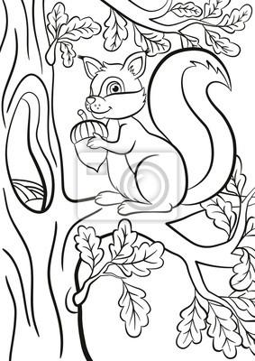 Malvorlage Kleine Süße Eichhörnchen Sitzt Auf Der Banch Eines