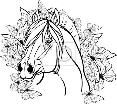 Malvorlage mit einem pferdeporträt fototapete • fototapeten ...