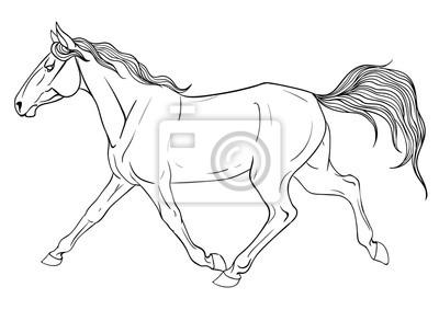 Malvorlage Mit Pferd Fototapete Fototapeten Schnelles Pferd