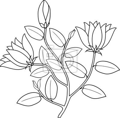 Malvorlage Pflanze Mit Blumen Und Blättern Fototapete Fototapeten