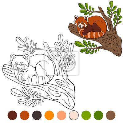 Malvorlage Roter Panda Kleiner Niedlicher Roter Panda Fototapete