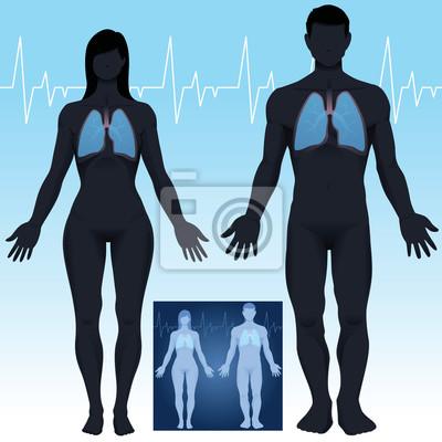Männliche und weibliche lunge anatomie im vektor fototapete ...