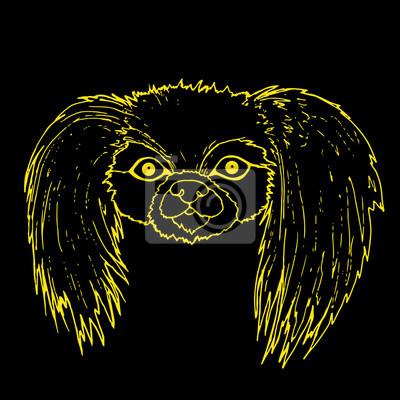 Fototapete Maulkorb Pekinese Hund Gelbe Farbe Gliederung Isoliert Auf Schwarzem