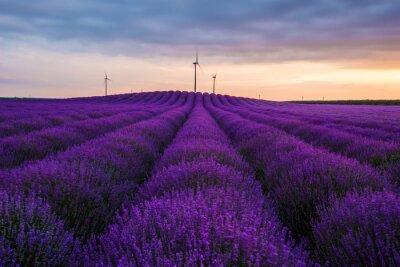 Fototapete Meadow von Lavendel. Natur-Zusammensetzung. Selektiver Fokus