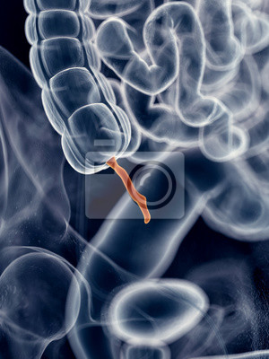 Medically accurate illustration of the appendix fototapete ...