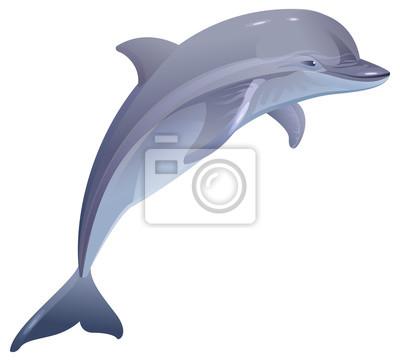 Fototapete Meeressäuger Delphin