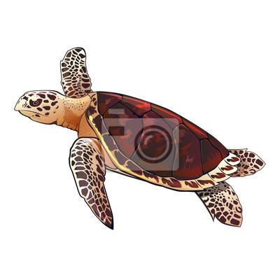 Meeresschildkröte-Abbildung