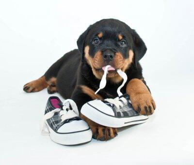 Fototapete Meine Schuhe!