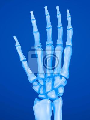 Menschliche handgelenk anatomie. röntgensicht. medizinisch genaue ...