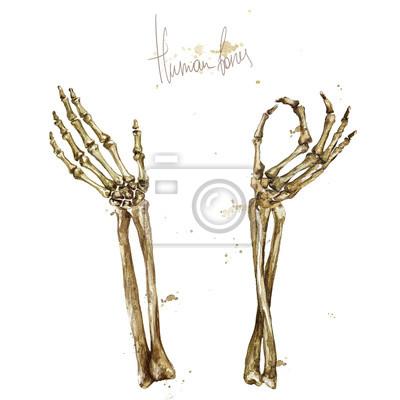 Ausgezeichnet Anatomie Knochen Praktisch Fotos - Anatomie und ...