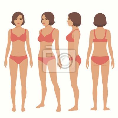 Menschliche körper anatomie, vorne, hinten, seitenansicht, vektor ...