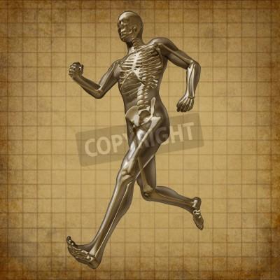Menschliche laufenden mann skelett röntgen-visuelle gesundheit ...