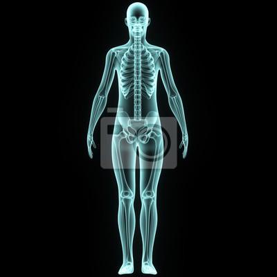 Menschlicher körper mit skelett fototapete • fototapeten medicals ...