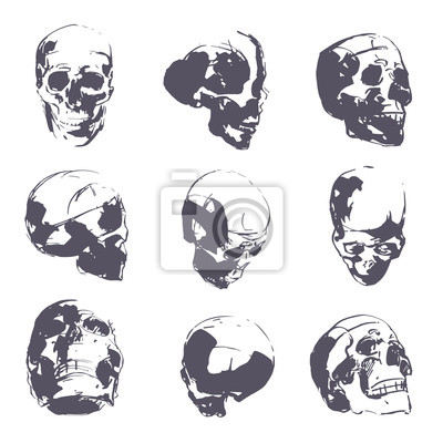 Menschlicher schädel in grober skizze. man kopf anatomie hand ...