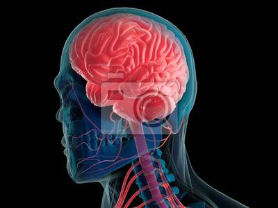 Menschliches gehirn und nervensystem in leuchtend roten innen ...