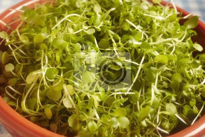 Fototapete Micro Cress Eine Art Von Salat Grün
