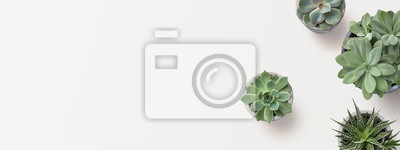 Fototapete minimalist modern banner or header with succulent plants on a white surface with lots of copyspace for your text - top view / flat lay