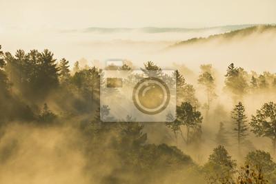 Misty Hügel mit Kiefern und Espen im Morgenlicht