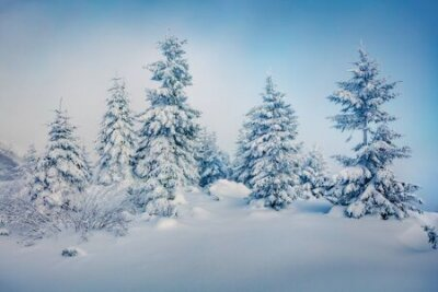 Fototapete Misty morning view of mountain forest. Fabulous outdoor scene with fir trees covered of fresh snow. Beautiful winter landscape. Happy New Year celebration concept.