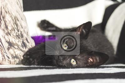 Młody Kot Kotek Ze Schroniska Leży Patrzy Bawi Się Fototapete