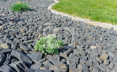 Fototapete Moderne Gartengestaltung