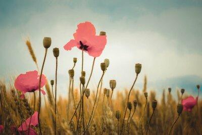 Fototapete Mohnblumen gegen den grauen Himmel