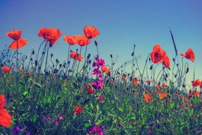 Fototapete Mohnblumen gegen den Himmel