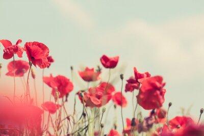 Fototapete Mohnblüten retro friedliche Sommer Hintergrund