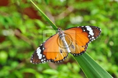 Monarch-Schmetterling auf Blatt