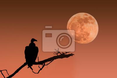 Mond und Geier
