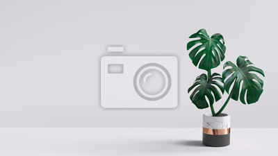 Fototapete Monstera plant in pot isolated on white background. Minimal tropical leaves houseplant home decor. 3d rendering.