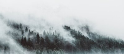 Fototapete Moody forest landscape with fog and mist
