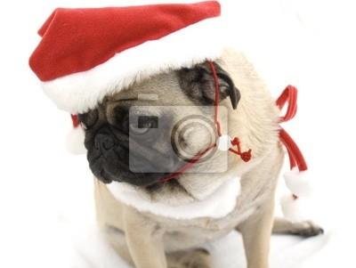 Mops Bilder Weihnachten.Fototapete Mops Traurig Schaut Ist Weihnachten Vorbei