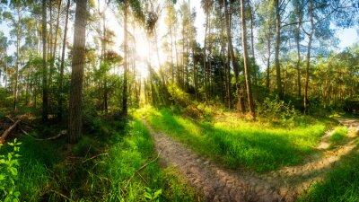 Fototapete Morgensonne scheint auf Wanderweg im Wald