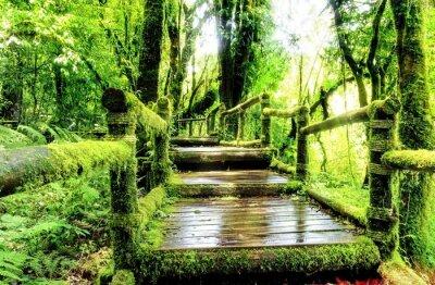 Moss auf der Holzsteg in regen Wald, Thailand