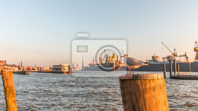 Möwe Am Hafen Hamburg Fototapete Fototapeten Hamburg Flux