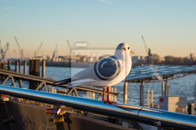 Möwe Guckt Auf Hamburger Hafen Fototapete Fototapeten Nordsee