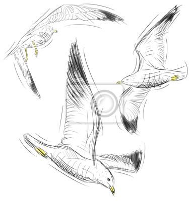Möwen fliegen