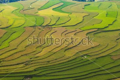 Fototapete MuCangChai,Terraced rice field in rice season in Mu Cang Chai, Vietnam