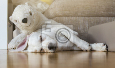 Müder Hund auf dem Boden mit seinem Eisbär Kuscheltier