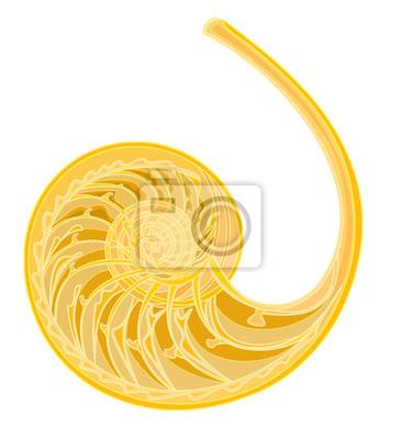Muschel Spirale