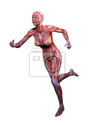 Muskel frau anatomie in bewegung 3d illustration fototapete ...