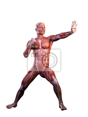 Muskel mann anatomie in bewegung 3d illustration fototapete ...