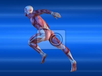 Muskelmodell - mann fototapete • fototapeten physisch, Sprinter ...