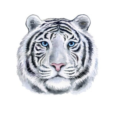 Muzzle white Tiger portrait with blue eyes isolated on white background. Watercolor. Illustration. Template. Hand drawing