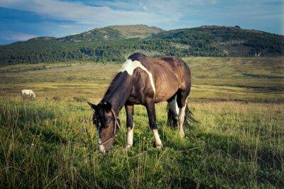 Fototapete Nahaufnahme eines Pferdes Beweidung in Wiese, im Hintergrund Berge und blauer Himmel