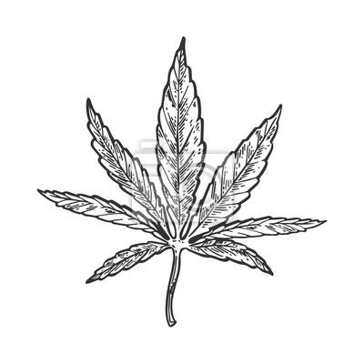 Narcotic cannabis blatt gravur vektor fototapete • fototapeten Linie ...
